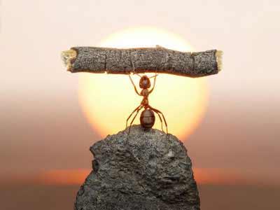 Was hilft gegen Ameisen im Garten wie im Haus?